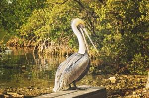 Everglades National Park Wildlife